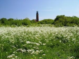 Leuchtturm Greifswalder Oie (Foto: wikipedia.de)