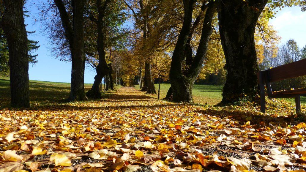 Weg über den schönen Laubteppich