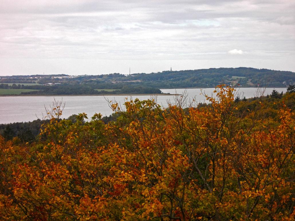 Aussicht vom Baumwipfelpfad Rügen (NEZR)