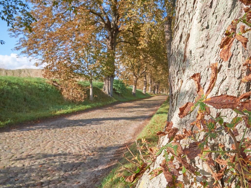 Rügen Herbst-Allee